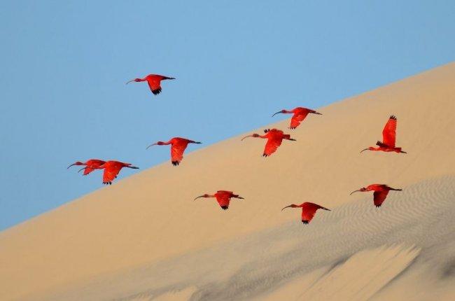 Победители конкурса «Фотограф дикой природы года» (10 фото)