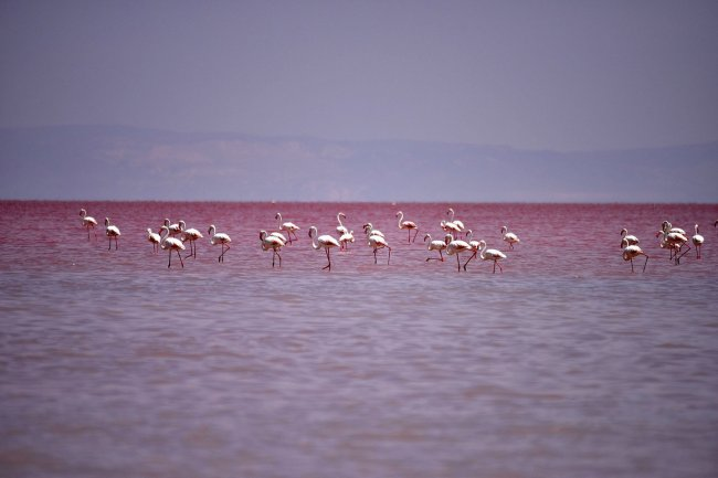 Турецкое соленое озеро Туз (4 фото)