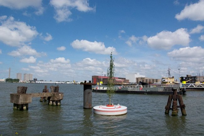 В Роттердаме будет высажен плавающий лес (6 фото)