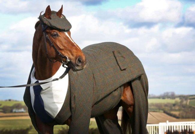 Первый в мире костюм для лошади (4 фото)