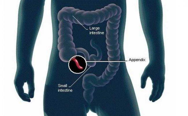 Интересные факты о пищеварении (5 фото)