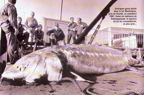 Интересные факты о рыбалке (4 фото)