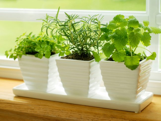Какую зелень я могу вырастить на балконе?
