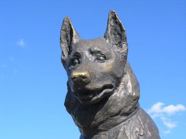 Авто - факт: псу, прождавшему хозяев на месте ДТП 7 лет, поставили памятник в городе
