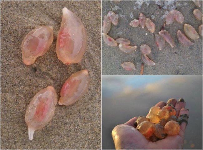 Неведомые существа выползли на песчаный пляж в Калифорнии (8 фото)