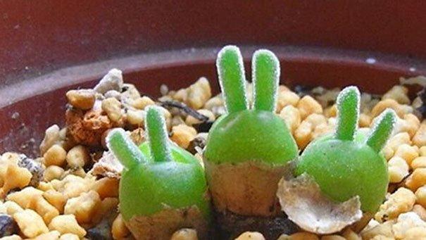 В Японии начали выращивать кроликов в горшке (7 фото)
