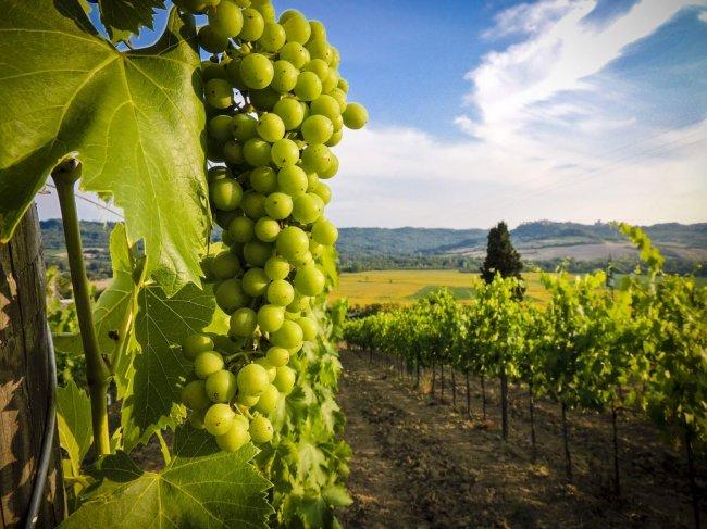 1493316116_0 9 интересных фактов о виноделии