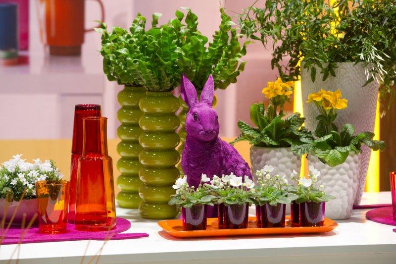 Как разные комнатные растения оказывают влияние на человека