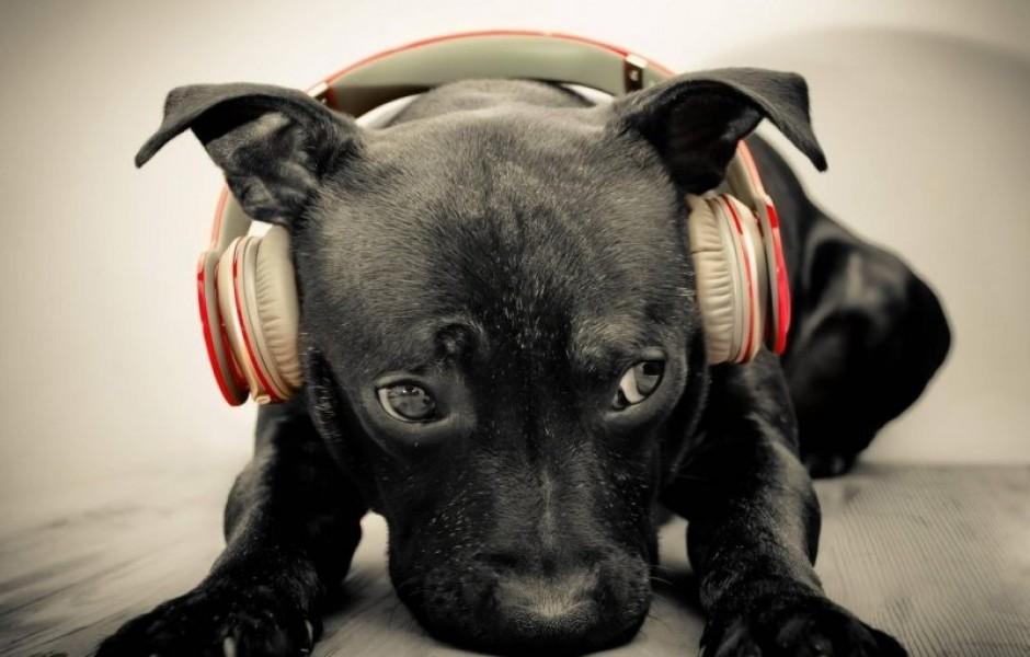 Как музыка влияет на мир животных