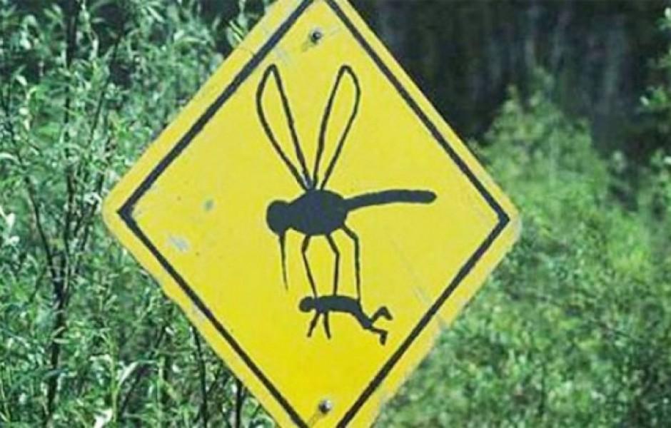 Почему комары кусают только избранных