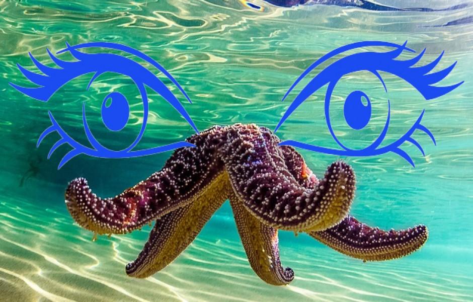 Сколько глаз у морской звезды?