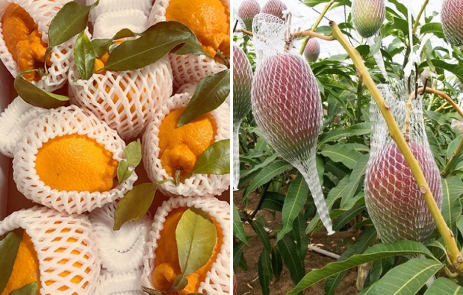 Самые дорогие фрукты в мире (10 фото)