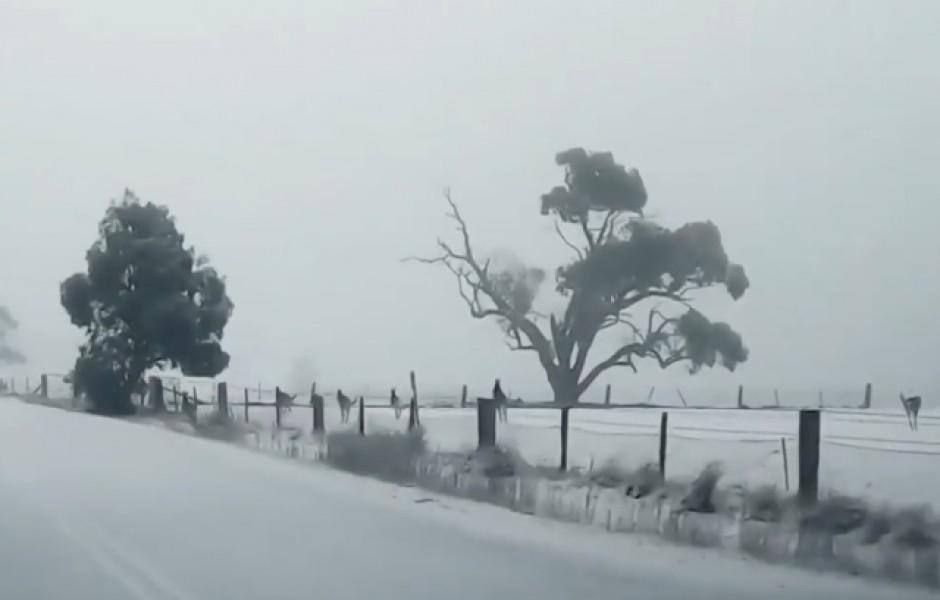 В Австралии выпал снег (видео дня)