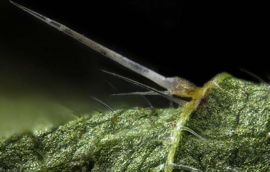 Необычные фотографии живой природы (15 фото)