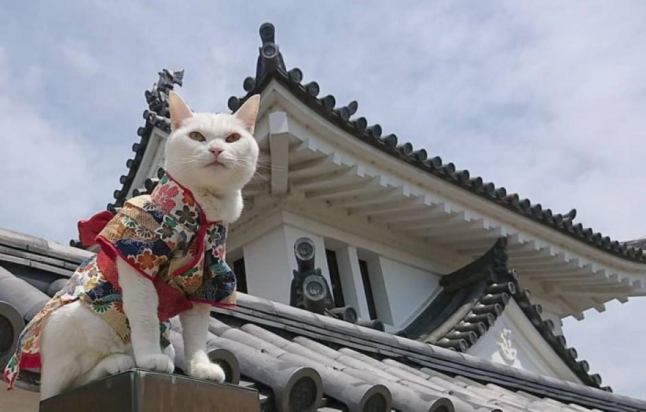 Необычный кошачий храм в Японии (23 фото)