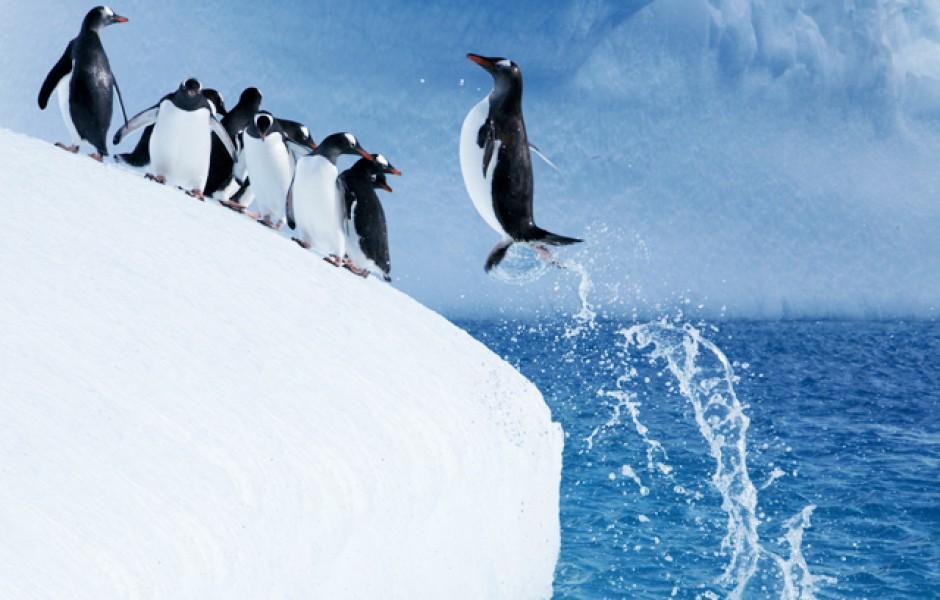Почему пингвины не могут летать?