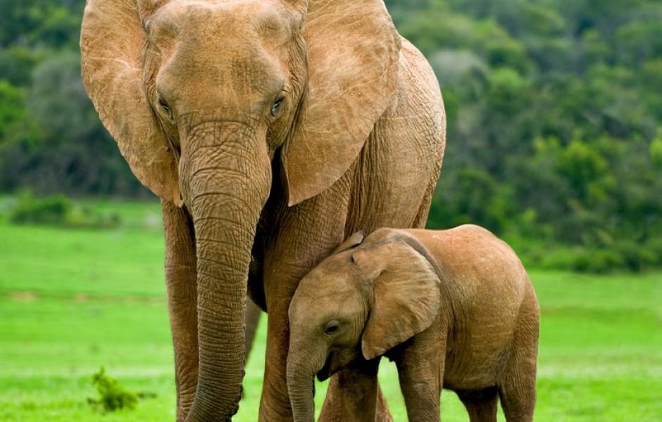 Животные с самым длительным периодом беременности