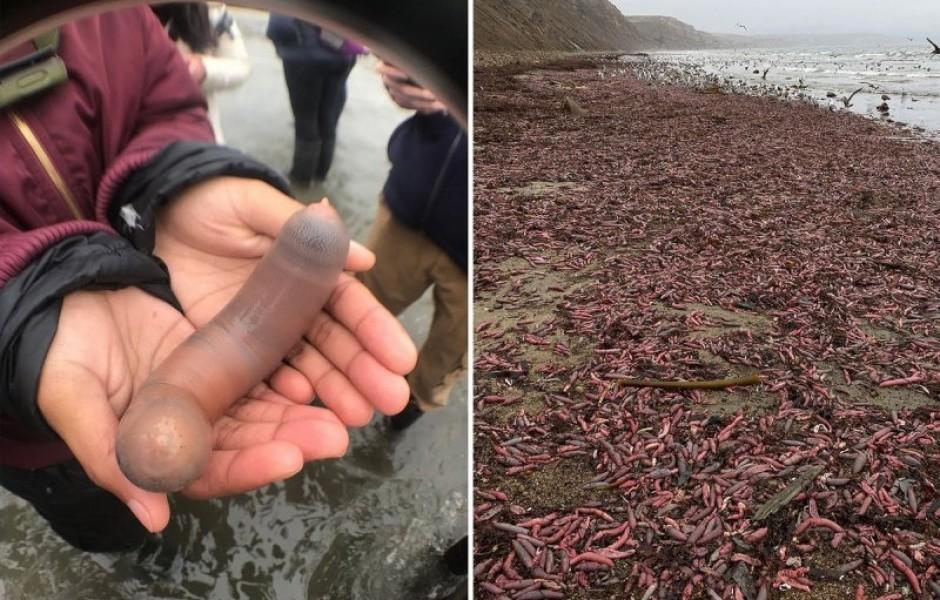 Тысячи рыб неприличной формы вымыло на калифорнийские пляжи