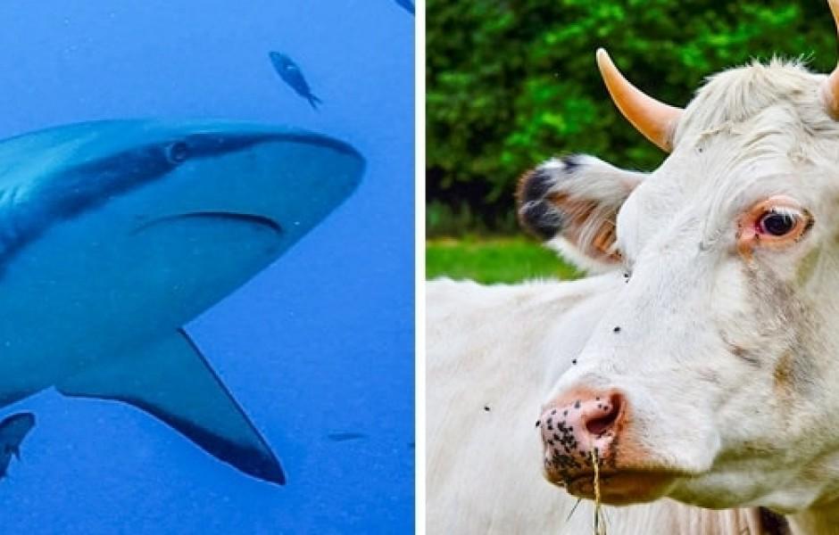 16 фактов о животных, о которых знают не все зоологи