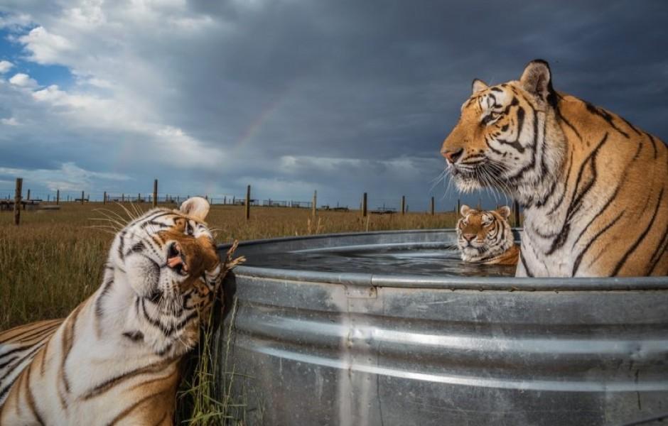 National Geographic выбрал и показал лучшие фотографии 2019 года