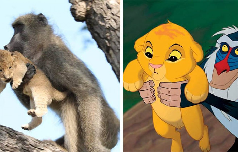 Бабуин и львёнок из ЮАР повторили знаменитую сцену из «Короля льва»