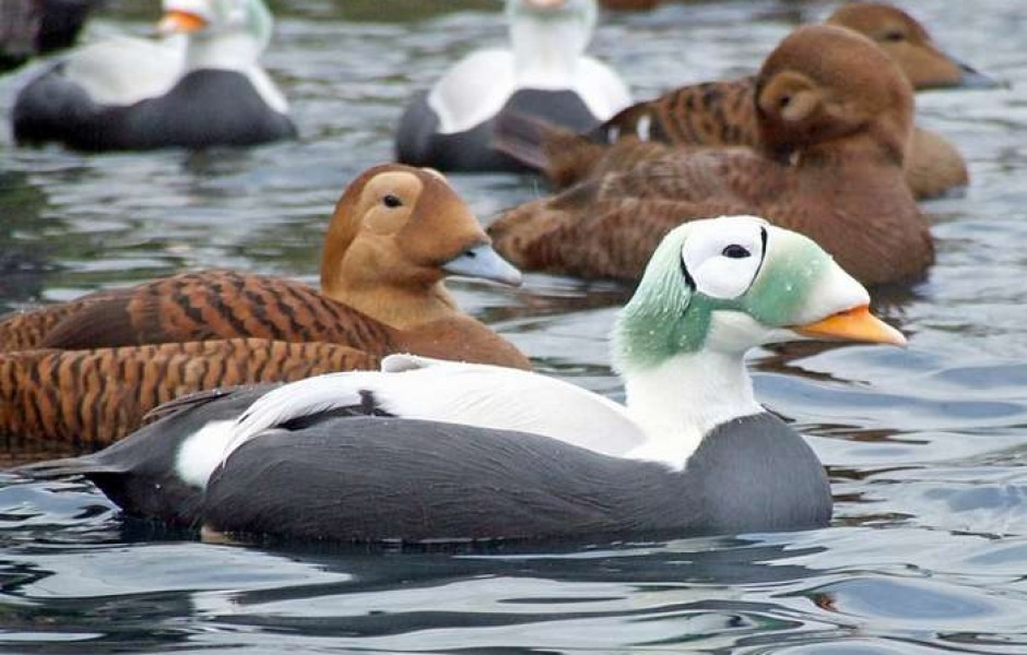 Самые удивительные птицы мира ТОП-10