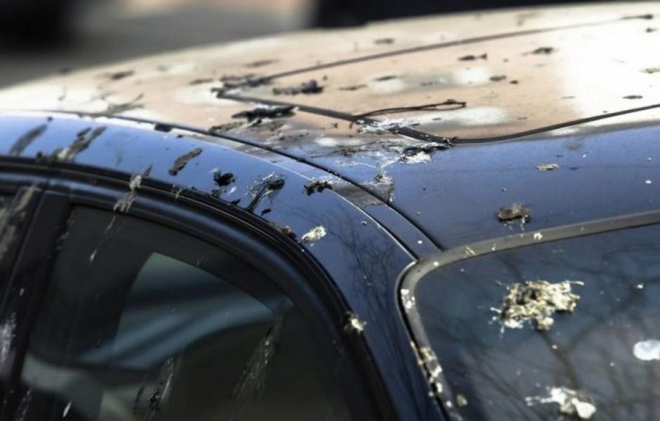 Каким образом птичий помет вредит кузову автомобиля и как его можно легко убрать
