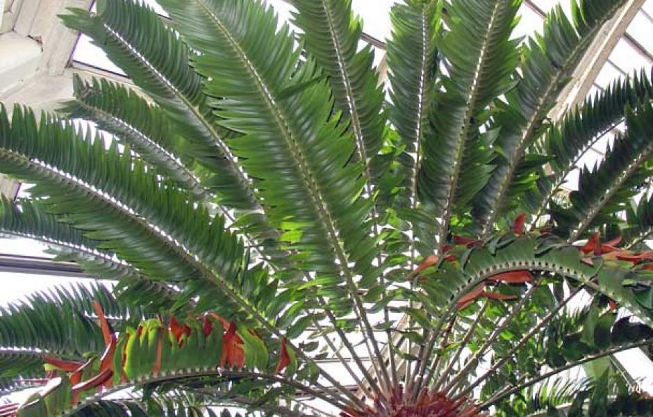 Душераздирающая история самого одинокого растения на планете (2 фото)