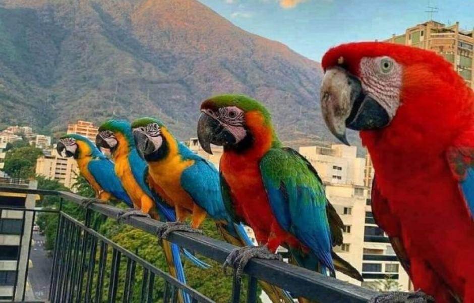 Какие животные играют роль голубей в разных странах