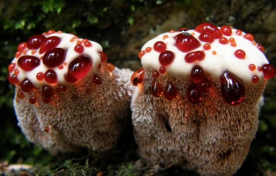 Необычные грибы, словно из фантастического романа