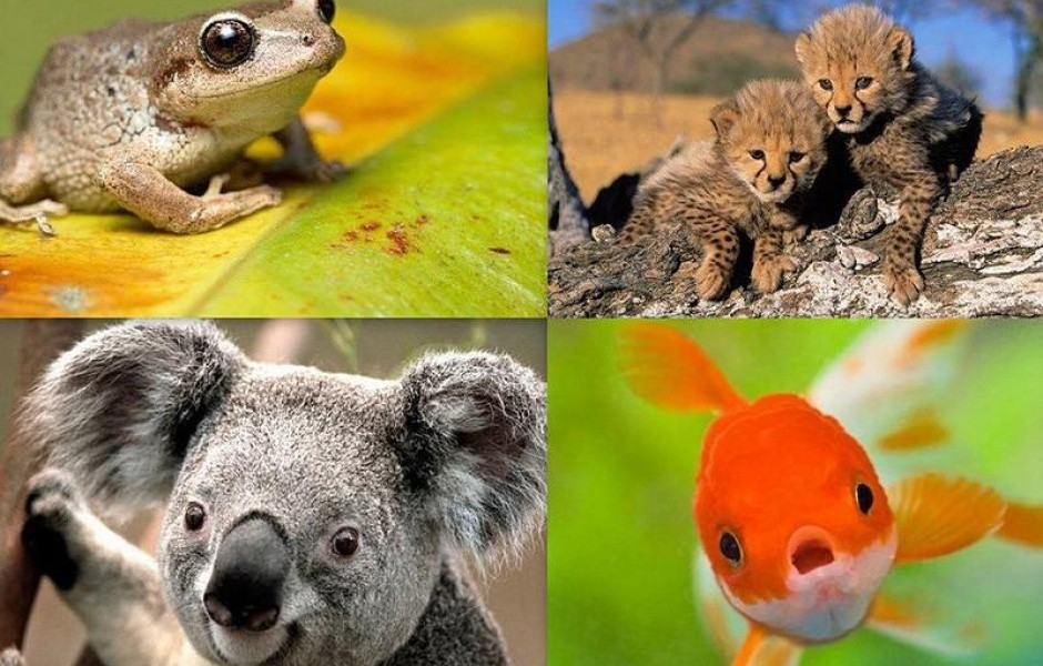 10 совершенно ошибочных фактов о животных