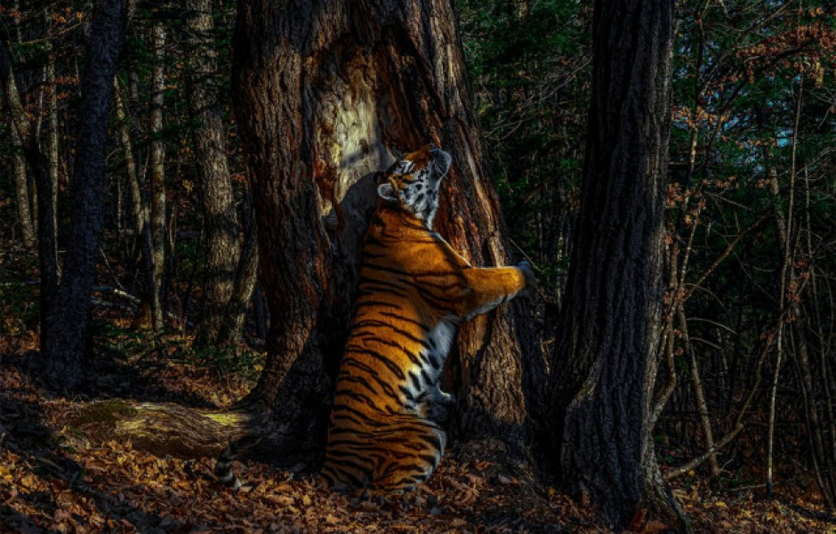 Зрелищные работы победителей конкурса на лучшую фотографию дикой природы 2020 года (13 фото)