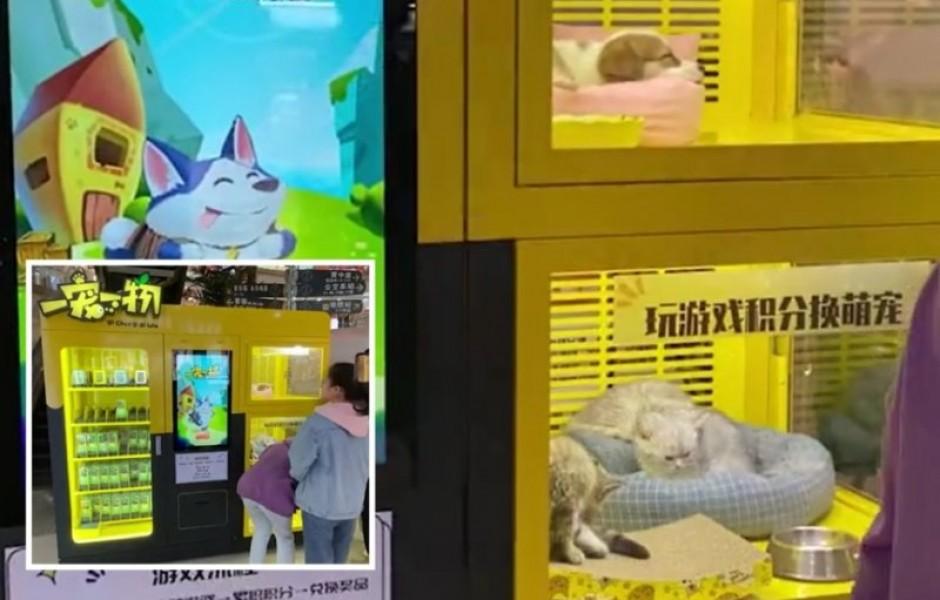 В Китае появились игровые автоматы с живыми котятами и щенками, которые вызвали гнев в соцсетях