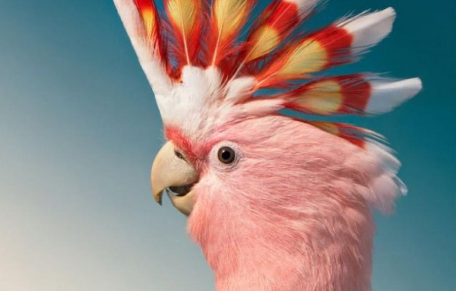 Красочные портреты птиц, которые делает фотограф Тим Флэк (12 фото)
