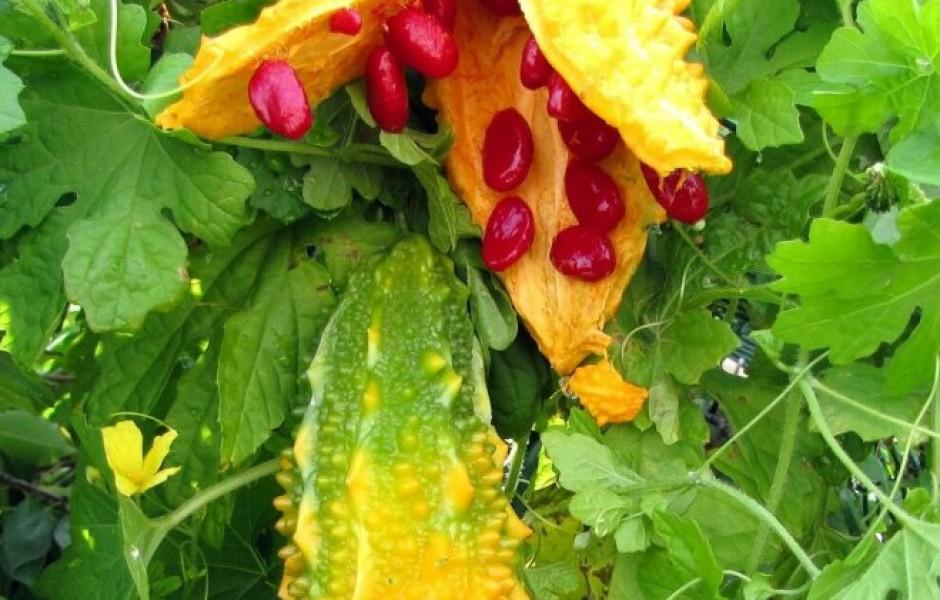 7 самых необычных растений для сада