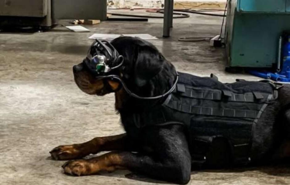 Очки дополненной реальности для собак
