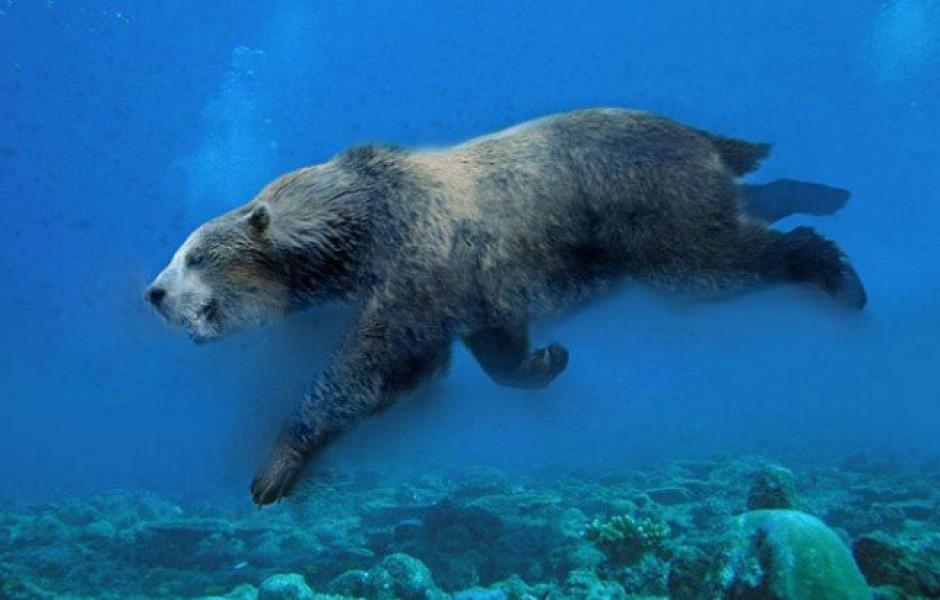 Колпономос — странный подводный медведь