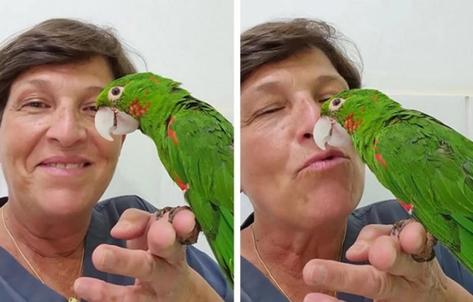 Попугай со сломанным клювом получил второй шанс на жизнь благодаря протезу