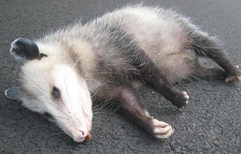 Примеры удивительных адаптаций в животном мире