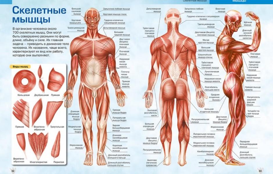 8 частей тела, которые больше не нужны человеку