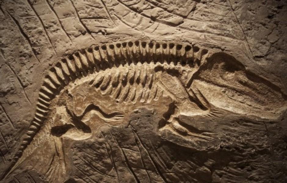 Самые интересные находки в окаменелостях