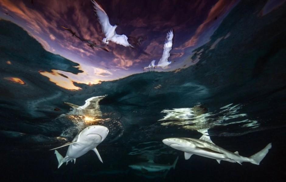 Победители конкурса на лучшего подводного фотографа 2021 года (20 фото)