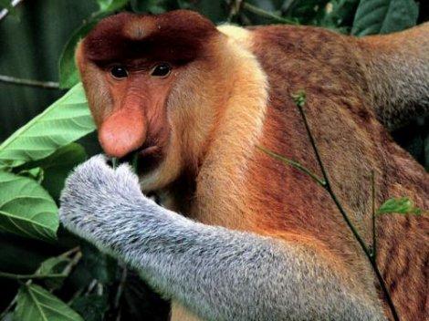 25 самых необычных животных в мире (25 фото)