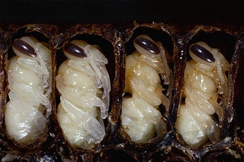 12 самых вкусных блюд из насекомых