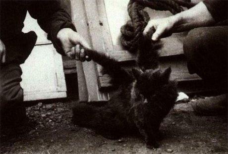 В Китае нашли кота с крыльями (2 фото)