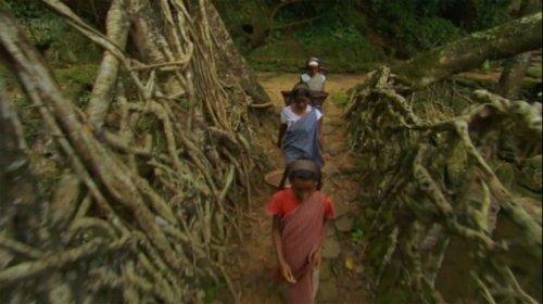 Мосты из корней деревьев в Индии (7 фото + видео)