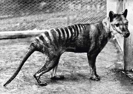 10 самых странных животных