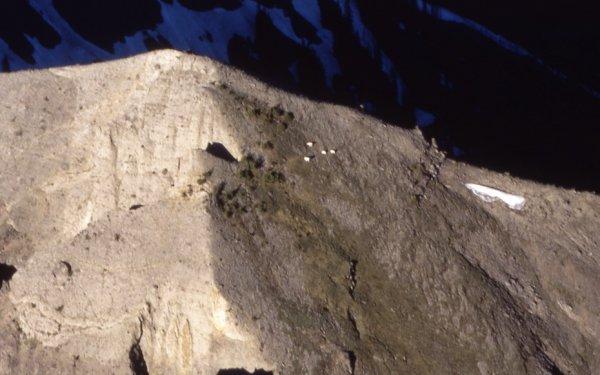 Козлы-скалолазы (8 фото + видео)