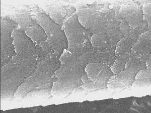 Академия наук подтвердила подлинность волоса йети (8 фото)