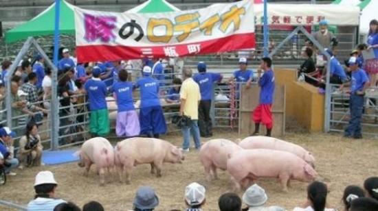 Родео на свиньях (2 фото + видео)
